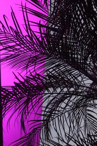 palmtree_turrell
